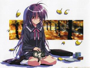 Rating: Safe Score: 15 Tags: animal autumn cat food iriya_kana iriya_no_sora_ufo_no_natsu leaves long_hair purple_hair red_eyes school_uniform tree white User: 秀悟