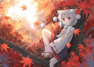 Rating: Safe Score: 69 Tags: animal_ears autumn forest hat inubashiri_momiji japanese_clothes kibisake leaves loli red_eyes short_hair skirt socks tail touhou tree white_hair wolfgirl User: otaku_emmy