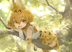 Rating: Safe Score: 58 Tags: animal_ears anthropomorphism brown_eyes brown_hair catgirl elbow_gloves gloves kemono_friends mossi serval short_hair skirt thighhighs tree zettai_ryouiki User: BattlequeenYume