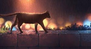 Rating: Safe Score: 90 Tags: animal cat night nobody original pasoputi polychromatic rain water User: BattlequeenYume