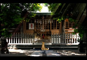 Rating: Safe Score: 93 Tags: animal building fox kamisama_no_goyounin kurono-kuro scenic shade tree User: Flandre93