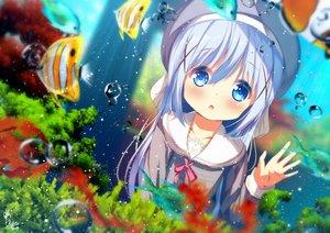 Rating: Safe Score: 37 Tags: animal aqua_eyes blue_hair blush chinomaron fish gochuumon_wa_usagi_desu_ka? hat kafuu_chino loli signed underwater water User: あかり