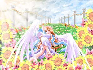 Rating: Safe Score: 1 Tags: brown_hair clouds dress flowers grass long_hair tagme wings wink User: Oyashiro-sama
