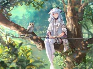 Rating: Safe Score: 88 Tags: achyue animal animal_ears arknights bird long_hair orange_eyes owl ptilopsis_(arknights) staff tree white_hair User: Nepcoheart