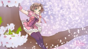 Rating: Safe Score: 60 Tags: breasts brown_hair cleavage dlsite.com dress malino original petals premium-chan tagme thighhighs tree watermark User: Wiresetc