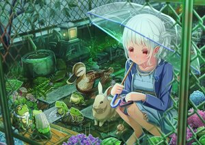 Rating: Safe Score: 51 Tags: abo_(kawatasyunnnosukesabu) animal bird camera duck flowers frog original rabbit rain red_eyes umbrella water wedding white_hair User: sadodere-chan