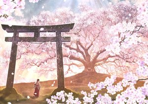 Rating: Safe Score: 73 Tags: brown_hair cherry_blossoms flowers japanese_clothes kupe long_hair miko original petals ponytail scenic shrine torii tree User: RyuZU
