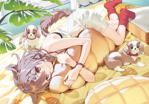 Rating: Safe Score: 103 Tags: animal animal_ears bed braids brown_hair cat_smile dog doggirl dress hololive inugami_korone misoni_comi red_eyes socks summer_dress tail wristwear User: BattlequeenYume
