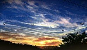 Rating: Safe Score: 43 Tags: animal bird clouds gensuke original scenic sky sunset User: FormX