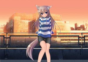 Rating: Safe Score: 68 Tags: animal_ears bike_shorts blush mizunoe_kotaru photoshop shorts tail User: gnarf1975