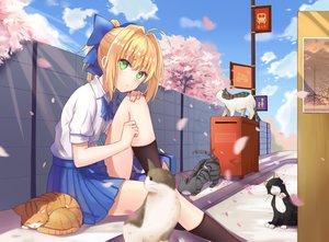 Rating: Safe Score: 120 Tags: animal blonde_hair blush bow cat cherry_blossoms clouds fate_(series) fate/stay_night green_eyes kneehighs ponytail saber seifuku sky tree yuhuan User: otaku_emmy