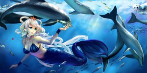 Rating: Safe Score: 128 Tags: animal bear bikini_top blue_eyes dolphin fish jiaoshouwen long_hair luo_tianyi mermaid necklace underwater vocaloid vocaloid_china water white_hair wristwear User: FormX