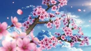 Rating: Safe Score: 137 Tags: cherry_blossoms clouds flowers nobody original petals sky waifu2x yuu_knmy User: RyuZU