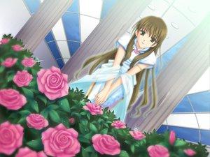 Rating: Safe Score: 21 Tags: akanegasaki_sora ever17 flowers takigawa_yuu User: Oyashiro-sama