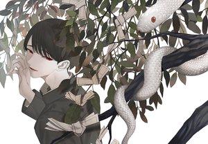 Rating: Safe Score: 4 Tags: all_male animal black_hair chinikuniku close male original paper polychromatic red_eyes short_hair snake tree User: RyuZU
