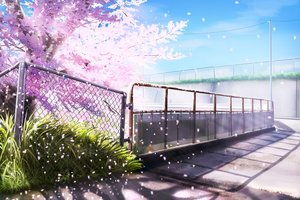 Rating: Safe Score: 62 Tags: cherry_blossoms grass hankachi_(okayama012) nobody original petals scenic sky User: RyuZU