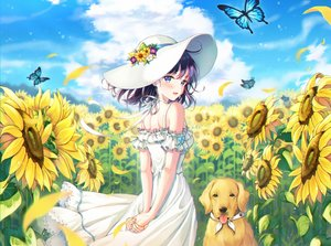Rating: Safe Score: 207 Tags: animal aqua_eyes blush butterfly clouds dog dress flowers foreign_blue hat original purple_hair short_hair sky summer summer_dress sunflower User: Dreista