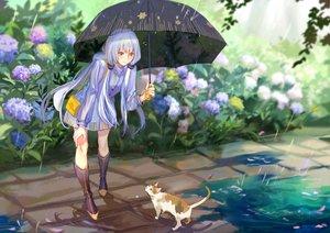 Rating: Safe Score: 53 Tags: animal aqua_hair boots cat dress flowers kirayoci long_hair petals rain umbrella vocaloid vocaloid_china water xingchen yellow_eyes User: RyuZU