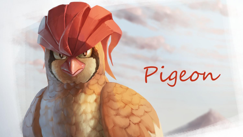 animal bird close nobody pidgeotto pokemon supearibu